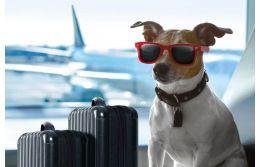 Как правильно перевозить животных в самолете: нюансы, правила и дельные рекомендации